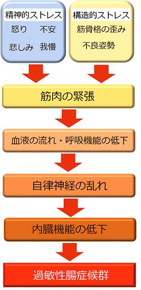 過敏性腸症候群が起こる仕組み 図