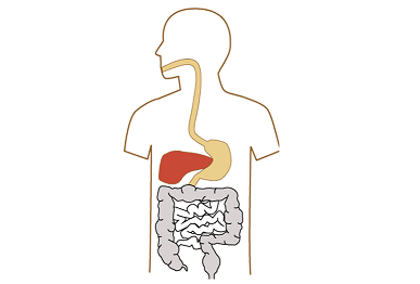 胃と人体図